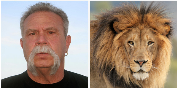 Paul Teutul Sr. and a lion