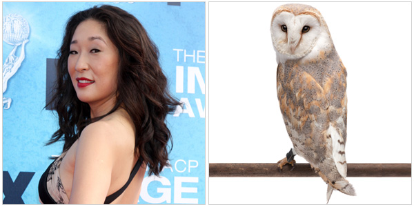 Sandra Oh and a barn owl