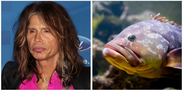 Steven Tyler and a bass