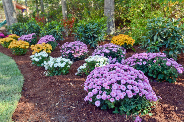 Chris Lambton's landscaping tips