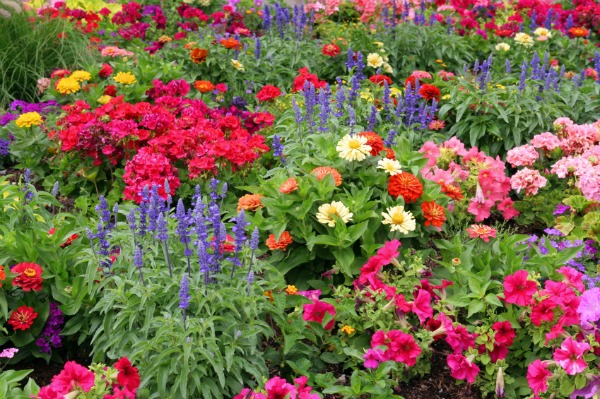 A guide to planting spring flowers