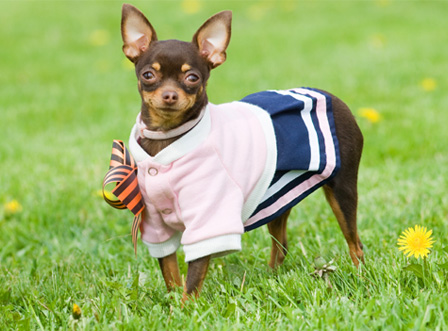 Spring fashionable dog
