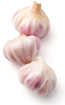 Fresh garlic in a row