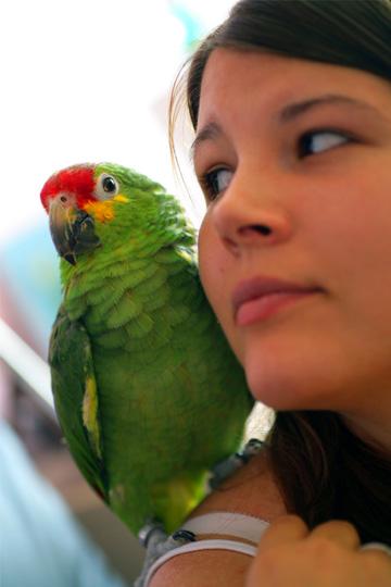 Put an end to bird blues