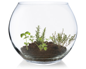 Fishbowl planter