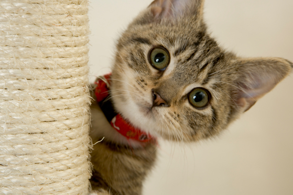Kitten playing on a cat tree