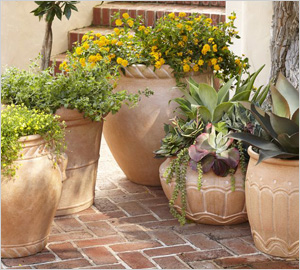 Container-friendly plants and our favorite planters