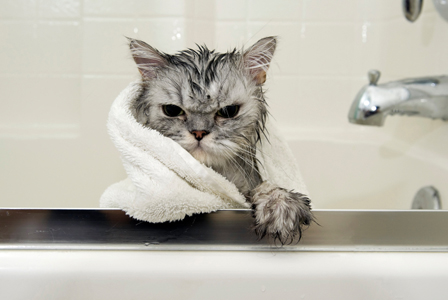 Angry cat in bathtub