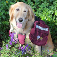 Arizona Goldens LLC service dog