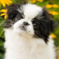 Best low-maintenance dog breeds