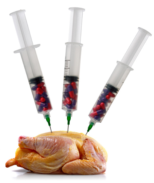 Chicken being injected with hormones