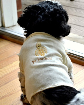 DIY Dog shirt