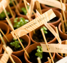 Herb planters as a wedding gift