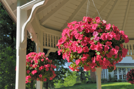 Hanging basket of inpatiens