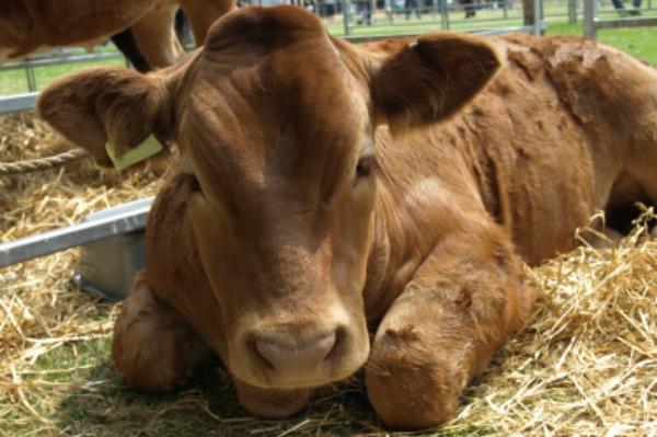 Livestock fair