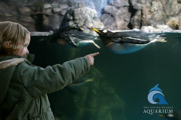 The Living Planet Aquarium Sandy Utah