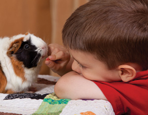Guinea pig and boy