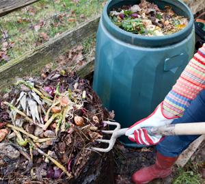 Start a compost bin