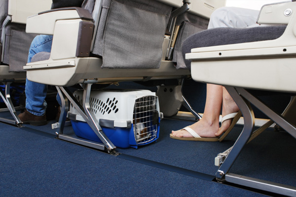 dog in carrier on plane