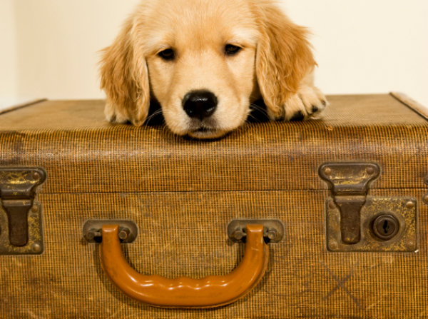 Dog with old suitcase