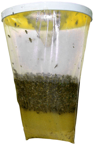 Flies Be Gone Non-Toxic Fly Trap. Y