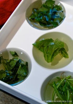 freezed chopped, fresh herbs