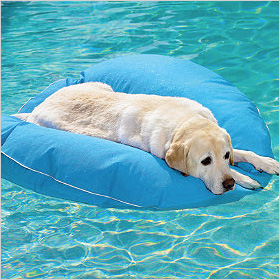 dog pool float and lounger