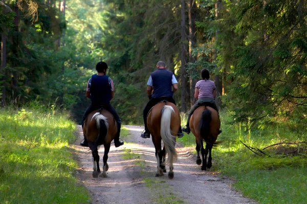 Trail Ride
