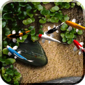 Koi Live wallpaper app