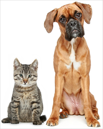 Boxer dog and cat