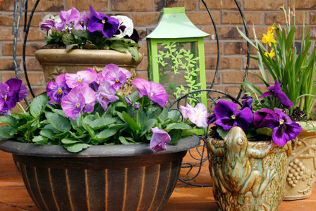 Lush potted gardens to suit any space