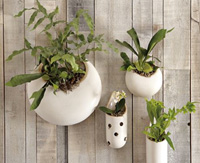 West Elm ~ Shane Powers Ceramic Wall Planters ~ Pierced Tube Planter