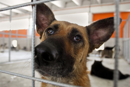 Sad dog in animal shelter