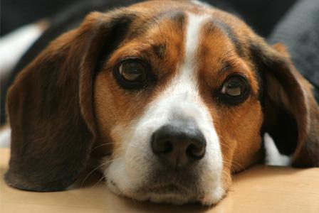Animal cancer symptoms