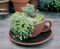 Garden Artisans ~ Tea Cup and Saucer Planter