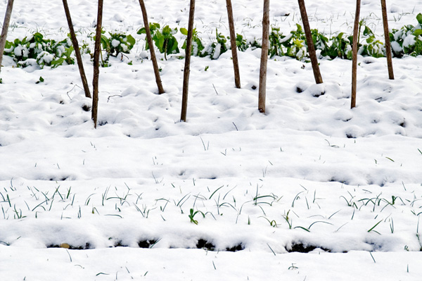 It's easy to winterize your yard