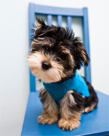 Cute puppy on chair