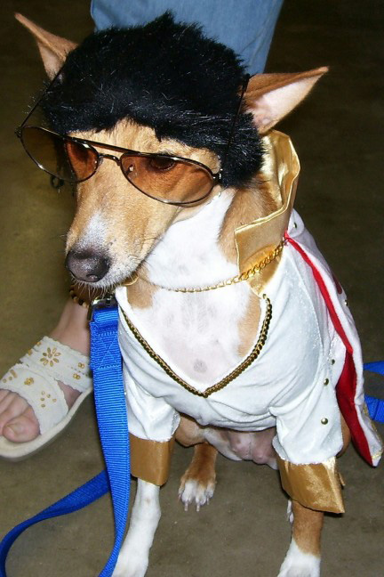 Elvis hound dog costume