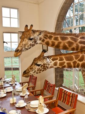 Wildlife explorations at hotels