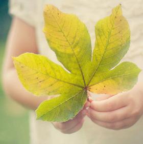 Craft Ideas Leaves on Simple Autumn Craft Ideas To Start The Season
