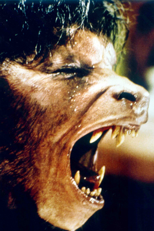 David Naughton as David Kessler in An American Werewolf in Paris