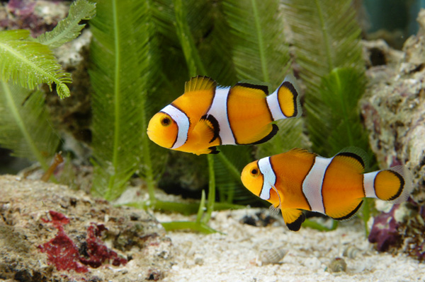 Saltwater Aquarium Fish Names