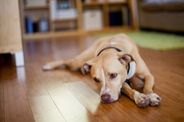 Pit Bull Statistics Defend Pitbulls | Personal Blog