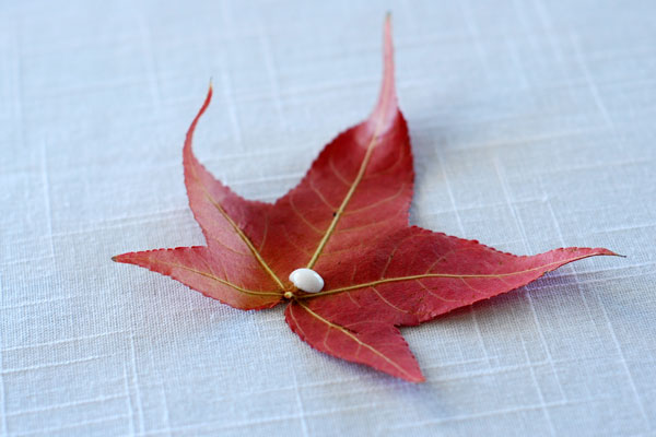 Dot of glue on the back of a leaf