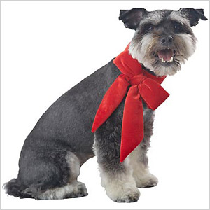 Holiday red velvet bow collar