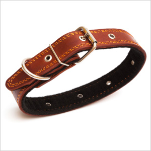 Dog collar