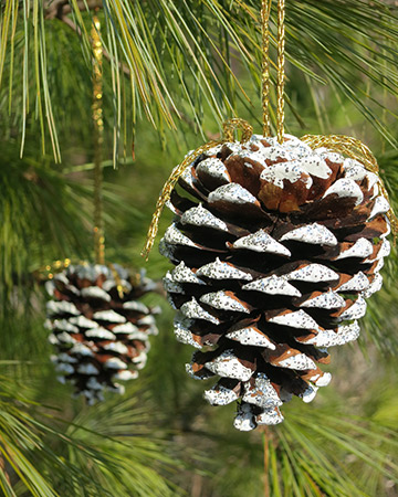 Snowy pine cone ornaments Homemade christmas decorations using pine cones