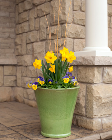 Pansies on front porch