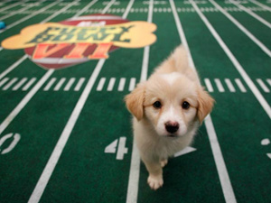 Puppy Bowl | Sheknows.com