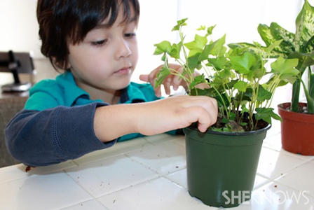 Rainy day activities - Indoor gardening